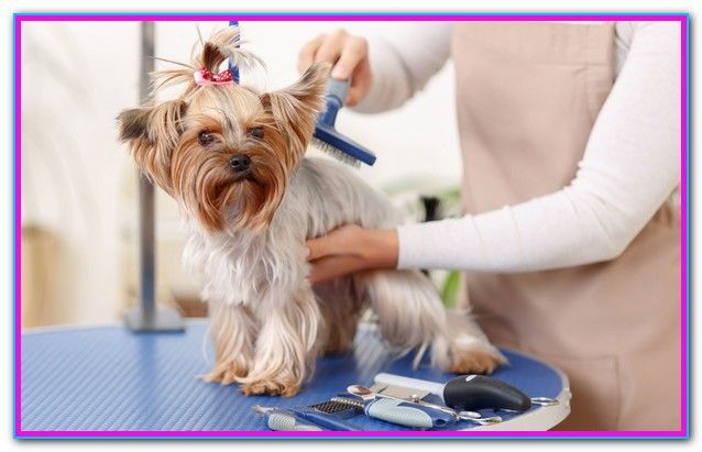 Self Grooming For Dogs Near Me Dog Grooming Pet Grooming Dog Grooming Supplies