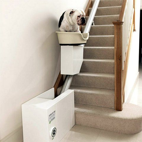 Best for dogs ever! Gadget: Salva escalera para perros | mypinkadvisor.com
