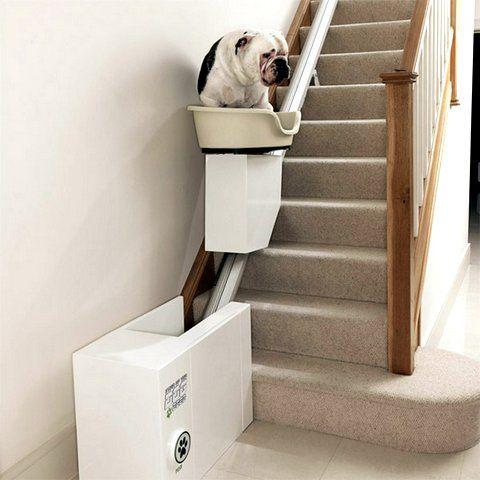 Best for dogs ever! Gadget: Salva escalera para perros | mypinkadvisor.com