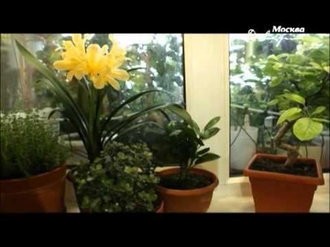 """Москва.Доверие """"О растениях"""" (Белокрылка) - YouTube"""