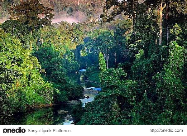 Amazon Yağmur Ormanları, Brezilya & Güney Amerika