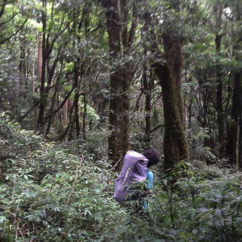 【twaikatin】さんのInstagramをピンしています。 《Hutan Lumut, Mt. Argopuro. East Java, Indonesia. #argopuro #gunungargopuro #gunung #moss #mountain #nature #forest #travel #explore #holiday #hiking #hike #hiker #camping #green #tree  #indonesia #印尼 #爬山 #登山 #绿 #森林 #山 #自然 #旅 #산 #등산 #인도네시아 #インドネシア》