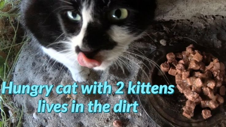 Feeding Hungry Cat With Two Baby Kittens In 2020 Kittens
