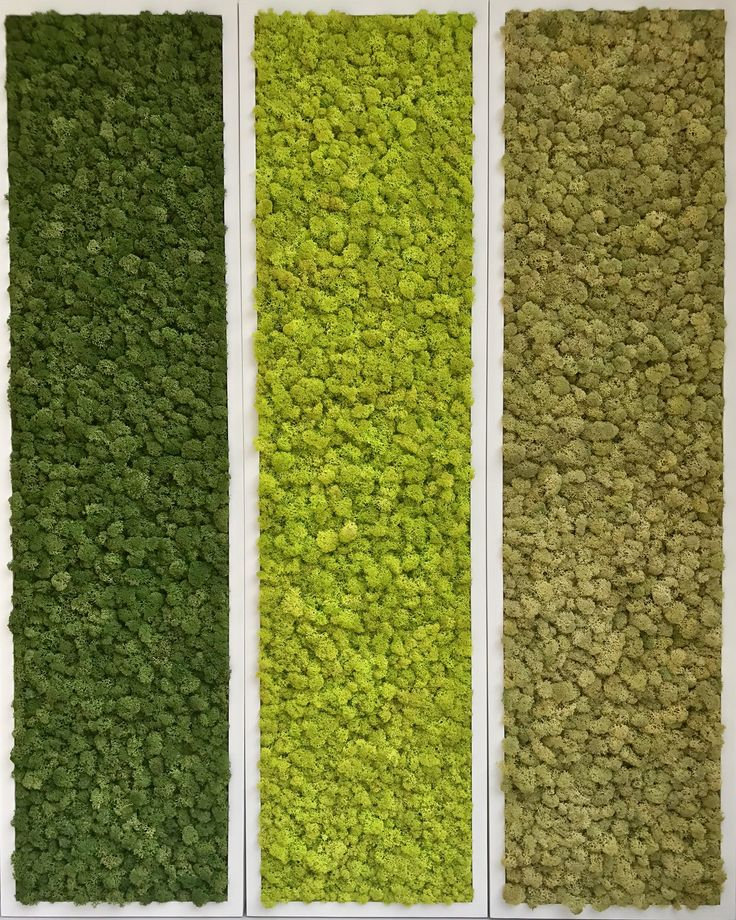 plantwalldesign created this triptych with real Reindeer Moss. These minuscule plants have been stabilized through a process by which the cells are injected with glycerine and dyed, perfectly preserving the fractal structure of the plant.