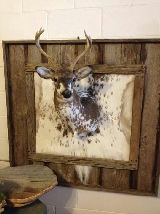 Great Idea If You Re Not Doing A Full Body Mount With Piebald Or Hunting Roomshunting Cabindeer Decordeer