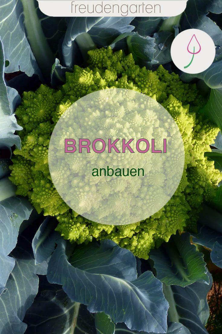 Brokkoli Anbauen In 2020 Pflanzen Garten Und Outdoor Garten Pflanzen