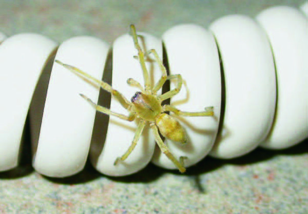 Common spiders in and around homes - prevention/removal tips to calm my arachnophobia