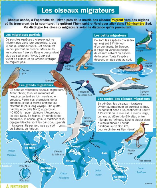 Fiche exposés : Les oiseaux migrateurs