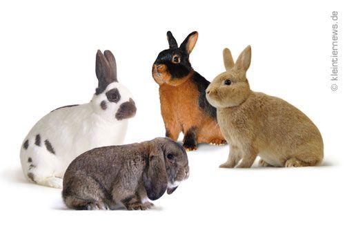 Bilder von Kaninchenrassen