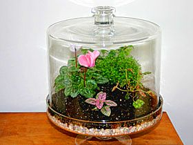 How-To Project: Building a Terrarium. Omaha NE terrariums information