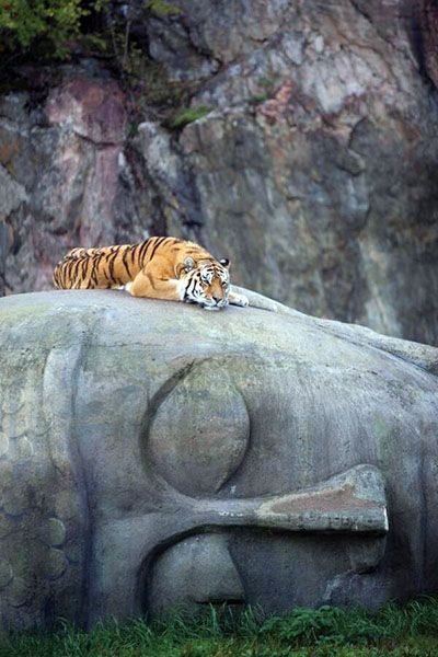 There is a story that the Buddha, in a previous life, gave his body to a Tiger so she could feed her staving cubs.