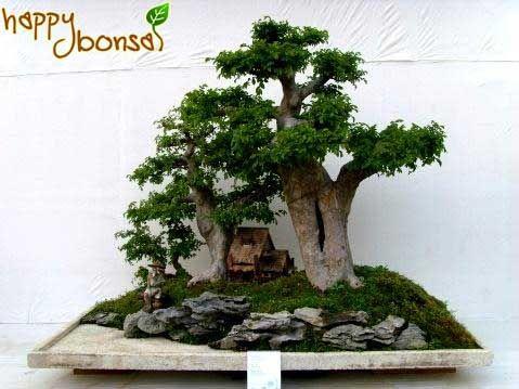 Types of Bonsai Trees | Bonsai Trees - Tree Species Commonly Used for Bonsai Trees | Happy ...