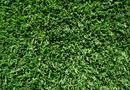 How to Make Zoysia Grass Look Incredible   Home Guides   SF Gate