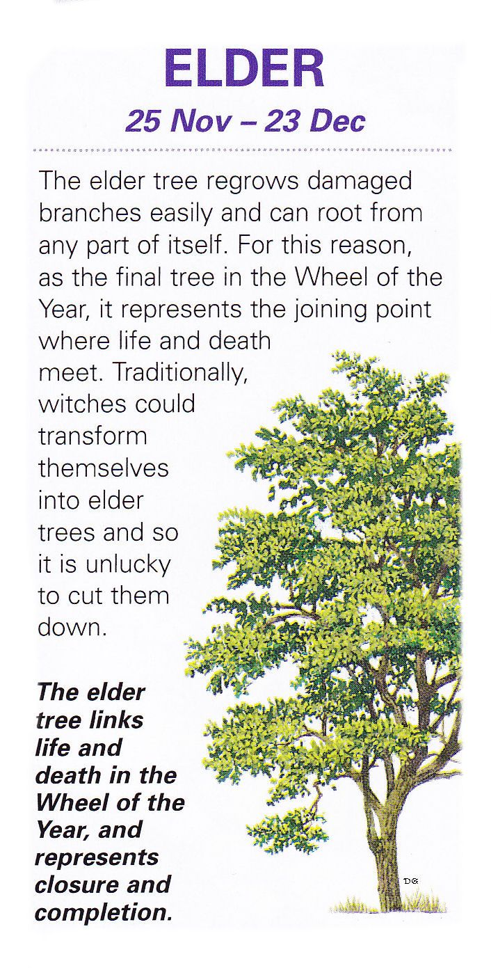 """Elder be the Lady's tree; burn it not, or cursed you'll be!"" Sacred celtic trees Elder"