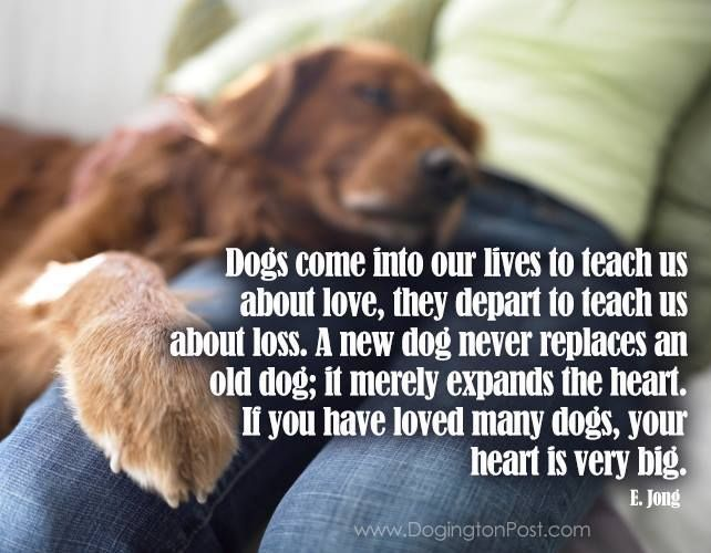 1000+ Images About Pet QUOTES On Pinterest