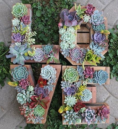 "6,356 Likes, 92 Comments - We Ship Succulents  (@fairyblooms) on Instagram: ""LVE was made for Me & You ☺️ »» ---- > :@succulent_wonderland #fairyblooms #succulents"""