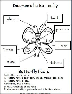 Butterfly parts worksheet - photo#2