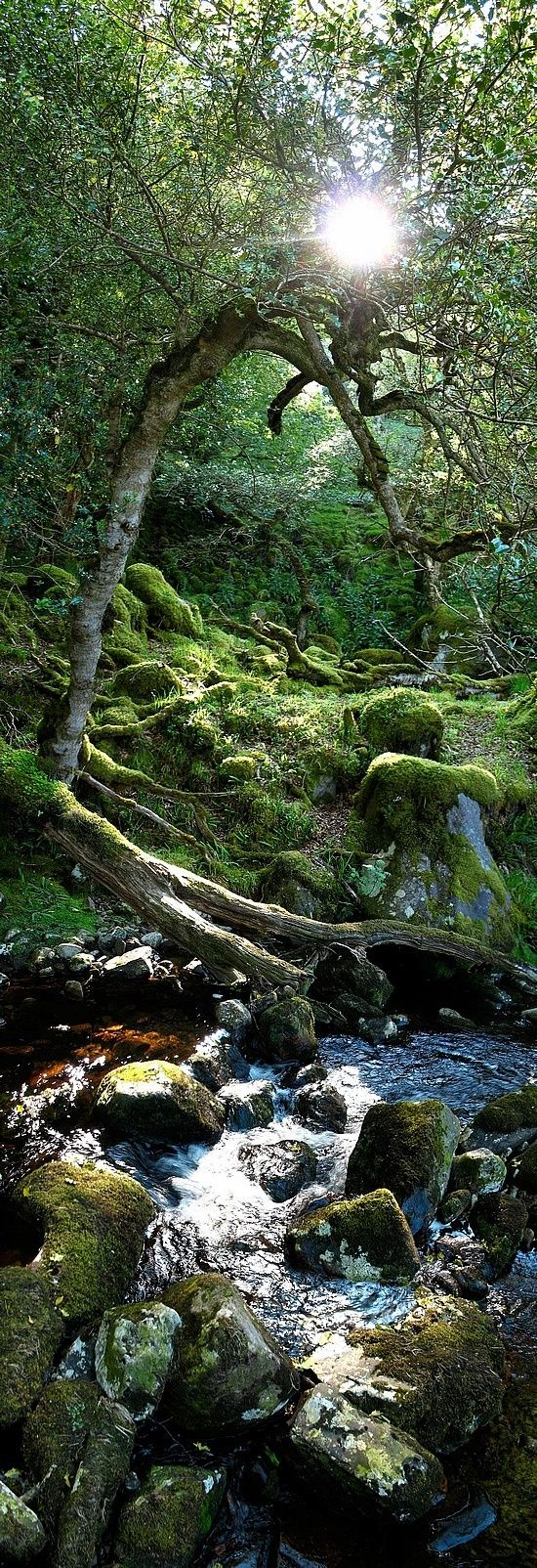 The trees and the babbling brook exchange ancient stories of the forgotten forest. Ireland