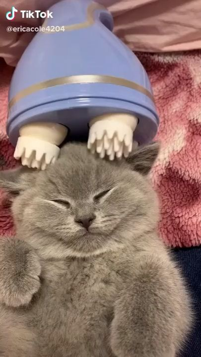 Massaging your cat can make your kitty rekaxed, calm down and feel more loved and cared for... This is the ultimate gift for your cat this holiday. #mycat #cat #love #care #home