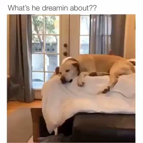 what is he dreaming