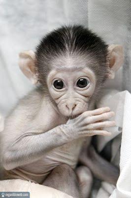 Photos comiques et insolites Animal – Singe v86