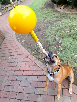 Top Boredom Busters for Dogs | Australian Dog Lover