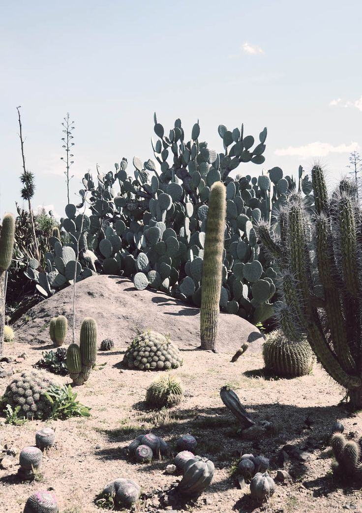 Cactus Country. photo by Bree Ellett, 2013