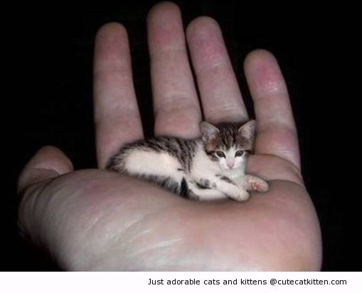 The smallest kitten in the world