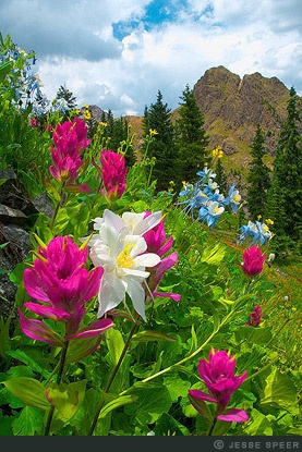 Governor Basin Paintbrush and columbine wildflowers grace a hillside in Governer Basin, a high basin in the San Juan Mountains.