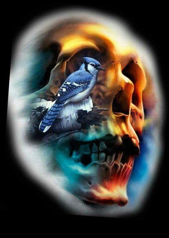 Blue Jay Skull......