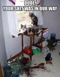 Damn cats.