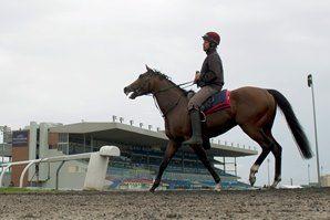 Canadian Horse Racing Plans Anniversary 250 Celebration  https://www.racingvalue.com/canadian-horse-racing-plans-anniversary-250-celebration/
