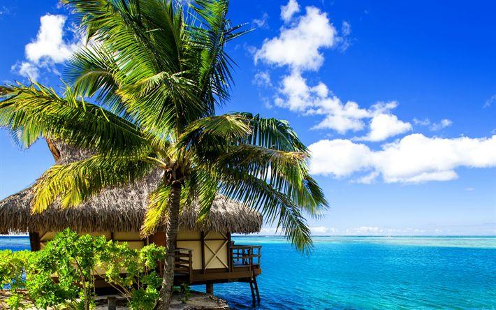 Download wallpapers French Polynesia, tropical island, palm trees, ocean, summer travel, blue lagoon, Bora-Bora