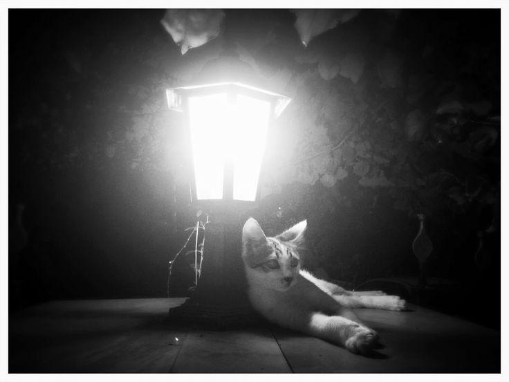 Cat's Melancholy by Rovsen Giffard on 500px #FlameOfFirePhotography