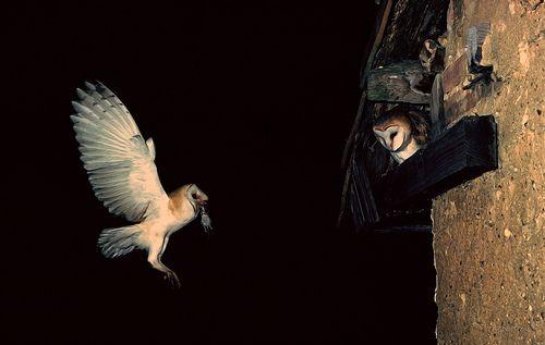 Depredación y mutualismo - Free of charge biological control