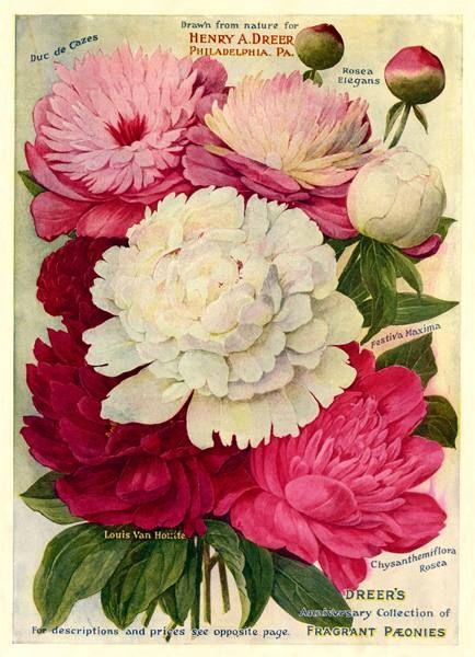 Powelton History Blog: A Collective Biography of a Philadelphia Neighborhood: An Homage to Powelton Gardeners