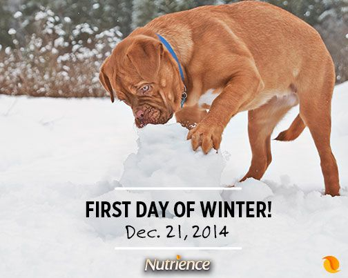 It's time to get out there and enjoy the #snow! #dog #cat #pet
