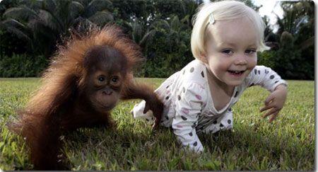 'I wanna be like you': A Junglebook jolly as toddler Emily and baby orangutan Rishi monkey around together