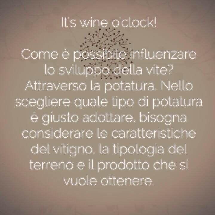 Come è possibile influenzare lo sviluppo della vite?  #wineoclock #winelovers #vino #wein #vinho #wine San Marzano Cantine