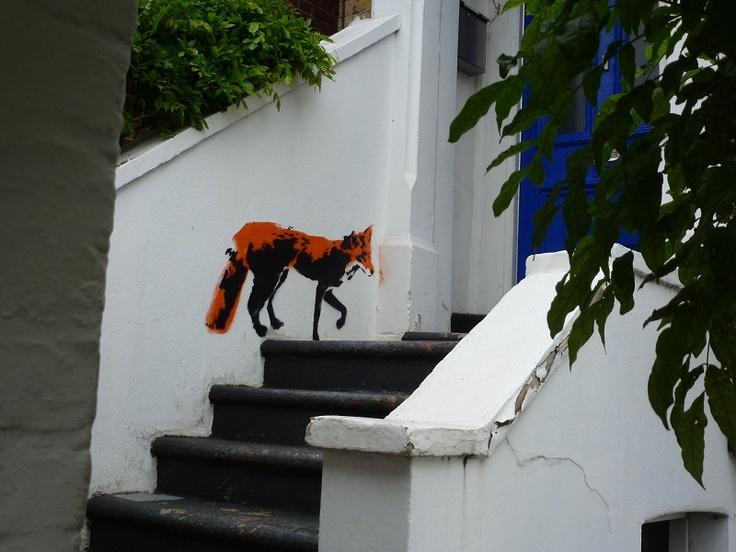 Urban fox Stoke Newington, east London June 2013