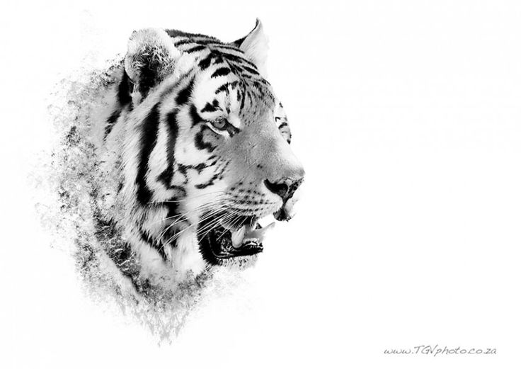 Tiger Painted by Shaun Thomas on www.digitalgallery.co.za