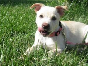 Adoptable Dogs In Evansville Indiana