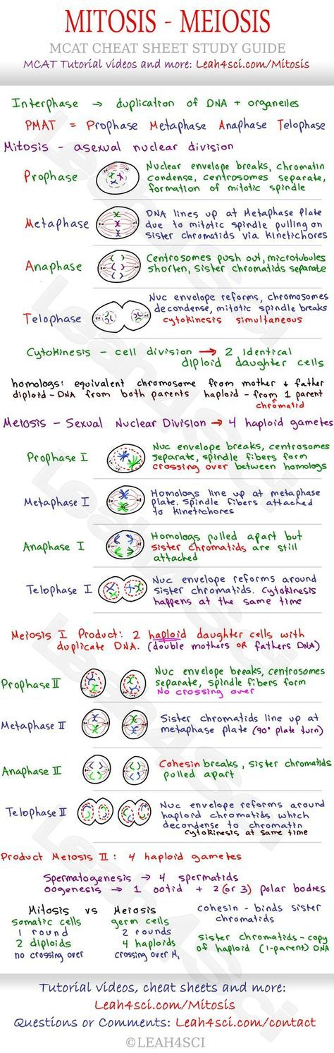 best mitosis ideas cell biology study biology  mitosis and meiosis mcat cheat sheet study guide learn what happens in each step