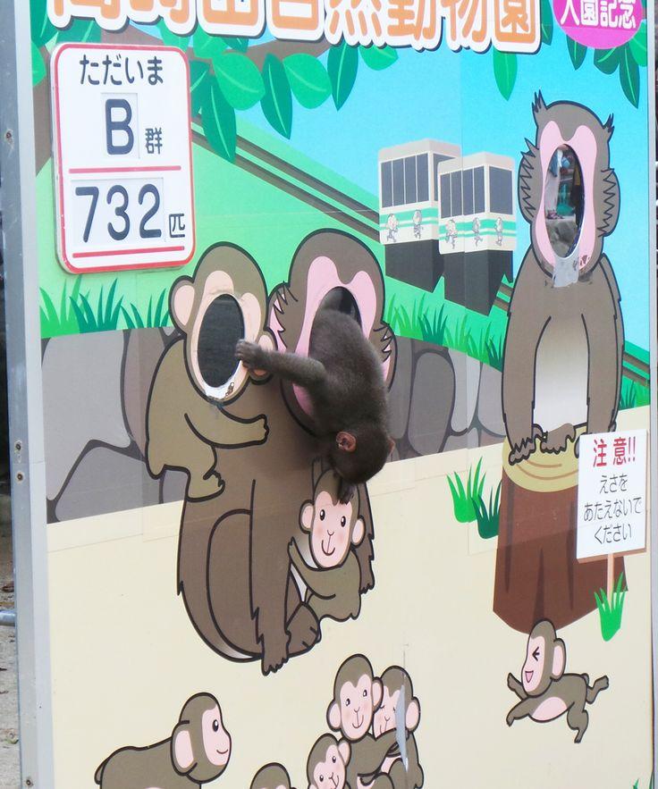 Singe joueur au parc aux singes de Takasakiyama, entre Beppu et Oita.