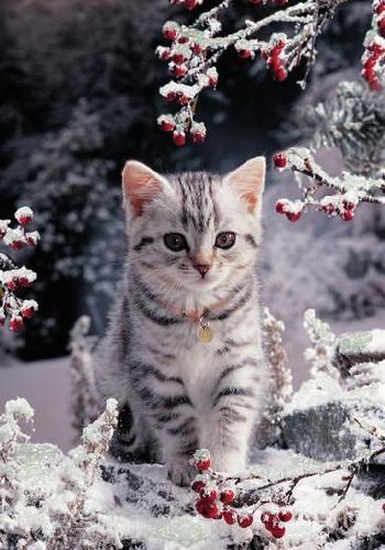 Cat with the snow. #cat