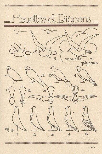 how to draw a realistic snow petrel