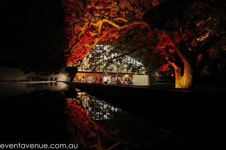 Uplighting of Stackings tree at Peppermint Bay, Hobart