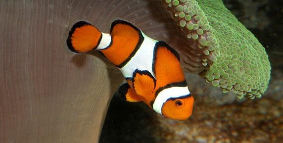 Sydney Aquarium, Sydney, Australia