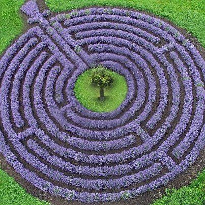 Lavender:  The Lavender Labyrinth, Kastellaun, Germany.  This beautiful labyrinth is made entirely of lavender.