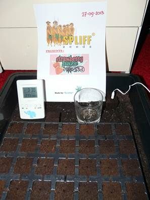Propagator @ 24 degrees, EazyPlugs humidity >80%  After this in 3,5 liter post directly on 12/12.